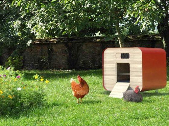 farmili vous permet d'élever des volailles en milieu urbain